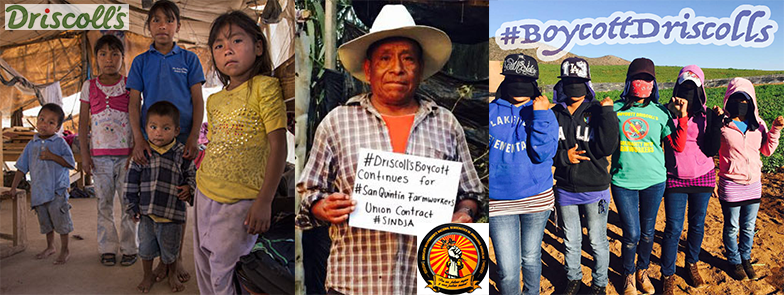 California: Stand with San Quintín Farmworkers! #BoycottDriscollsContinues