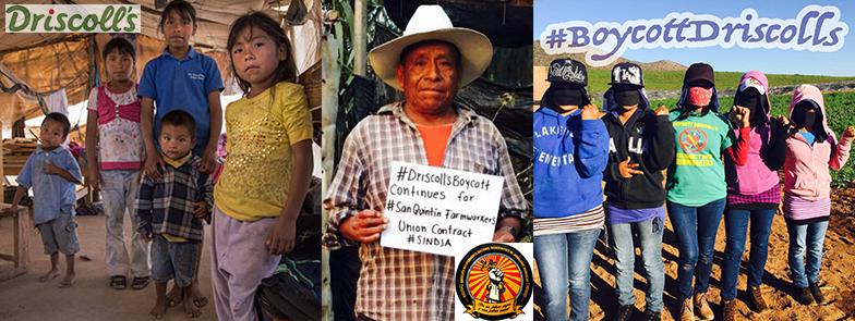 California: ¡Respaldemos a los Jornaleros de San Quintín! #BoycottDriscollsContinues